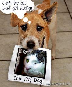 Oh My Dog! Vet 101