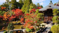 京都 清涼寺 嵯峨釈迦堂 弁天堂 紅葉 Japan,Kyoto,Seiryo-ji temple,Saga-Shakado,autumn leaves,colored leaves