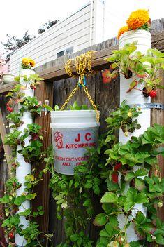 Edible vertical garden using DIY projects by Garden Up!, via Flickr