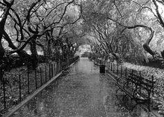 Blue Carrot Blog: Rainy days and Fridays