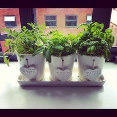 Home grown herbs, cute for kitchen window