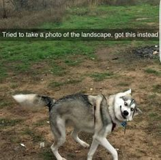 Capturing the right moment: | Dare You Not To Laugh At These 23 Animal Memes