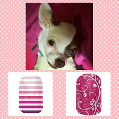 My #chihuahua Spot paired with matching #pink #jamberry #nail #designs. www.jaszumie.jamberrynails.net