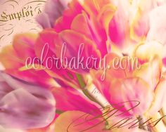 Tulp Glow- new from Color Bakery. Available on all our products as well as for art licensing. #tulipart #artlicensing #beautifulflowers