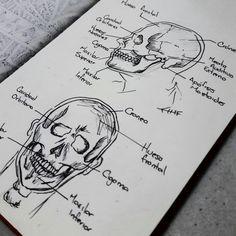 Estudiando algo de Anatomía #anatomy, #study, #drawing, #humanhead, #humananatomy, #drawingstudy, #moleskine, #staedtler, #sketch