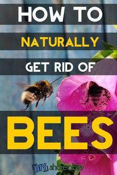 How To Get Rid Of Bees Naturally Without Killing Them