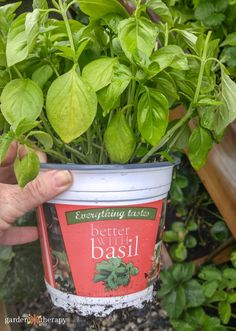 15 Incredible Basil Recipes You Can Make With Fresh Basil Preserving Basil, Fresh Basil Recipes, Emergency Preparation, How To Make Tea, Garden Planning, Herb Garden, Preserves, Harvest, Food And Drink
