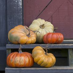 Kentucky Field Pumpkin Collection | Shop P. Allen Harvest Season, Fall Harvest, Fall Season, Faux Pumpkins, Halloween Pumpkins, Halloween Decorations, Allen Smith, Autumn Painting, Pumpkin Decorating