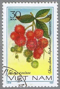 Nephelium lappaceum, series devoted to fruits, stamp printed in Vietnam, circa 1981