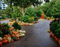 36 Easy but Creative Fall Garden Design Ideas in the Small Yard. A Fall Garden Style Ideas from the little Yard is the base of your landscape project. Art Floral, Pumpkin Planter, Dallas Arboretum, Autumn Display, Fall Plants, Terrace Garden, Garden Paths, Autumn Garden, Container Plants
