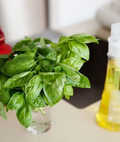 """how to keep herbs fresh:  teat them like fresh cut flowers.  Don't worry.  We had a """"DUH!"""" minute too."""