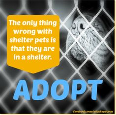 Adopt from a shelter or animal rescue. Save a life! Shelter Dogs, Animal Shelter, Rescue Dogs, Animal Rescue, Injured Wildlife, Stop Animal Testing, Baby Friends, National Animal, Pet Life