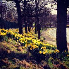 Inverleith Park #Stockbridge #Edinburgh #SCOTLAND