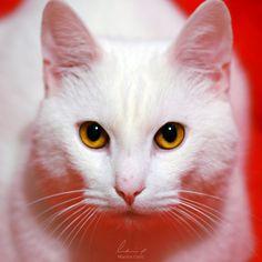 Cat Domination by =MarinaCoric on deviantART