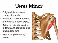 Advice On How To Get The Best Massage For Your Money. Are you looking for a nice massage? Hand Therapy, Physical Therapy, Occupational Therapy, Supraspinatus Muscle, Message Therapy, Gross Anatomy, Sports Therapy, Muscle And Nerve, Muscular System