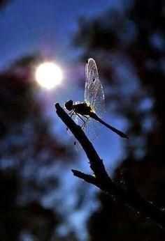 Zum zum zuar Beautiful Bugs, Amazing Nature, Simply Beautiful, Inspirational Quotes Wallpapers, Fairytale Art, Community Art, Mother Nature, Make Me Smile, Dandelion