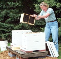 Setting up new hives - my daughters aunt the beekeeper!  She makes great honey!