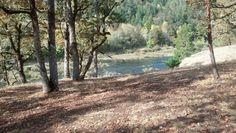 Oregon Oregon, Country Roads, Plants, Flora, Plant, Planting