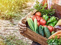 Werden Sie Selbstversorger und essen Sie nur das, was in Ihrem Garten auch wächst. Die besten Tipps für einen ertragreichen Gemüsegarten finden Sie hier.