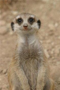 funny animals | Little Smile | Funny Animal Pictures