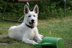 Ideal Information All Dog Owners Should Know About * Be sure to learn about your pet dogs from this link.