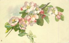 Apple blossom ~ 1906