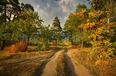 Image result for early fall tree