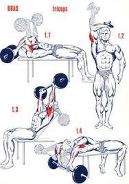 Resultado de imagen para shoulder musculation