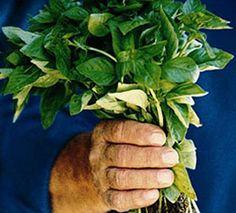 Pesto alla Genovese - Antonio Carluccio