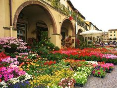 Greve in Chianti flower market