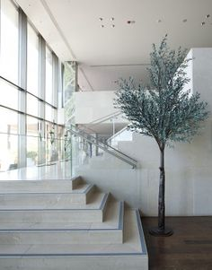Green olive tree installed in the lounge Interior Modern, Olive Tree, Scandinavian Design, Stairs, Lounge, Green, Home Decor, Future, Minimalist