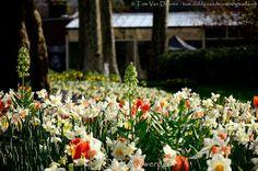 Flowers - bloemen | by MrTDiddy