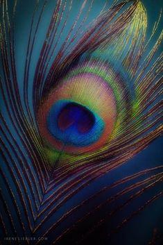 🌻 Jai Shri Radhe Krishna 🙏 🌻 Watch out Mahabharat and Ramayan All Episode Ramayan:… Peacock Painting, Peacock Art, Peacock Feathers, Krishna Painting, Krishna Art, Radha Krishna Photo, Radhe Krishna, Shri Hanuman, Baby Krishna