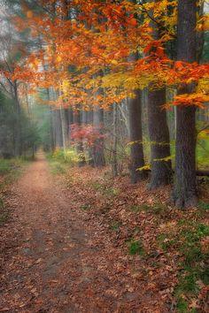 ✯ Down The Trail