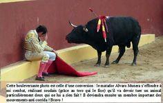 Corrida - Cette photo incroyable marque la fin de la carrière du matador Alvaro Munera de Torera. En plein combat, il s'est effondré de remords quand il s'est rendu compte qu'il incitait cette douce bête à se battre. A ce moment-là, il devint un farouche adversaire de la tauromachie. Le regard du taureau sur cette photo en dit long. Même péniblement blessé par les picadors, cet animal n'a pas attaqué le toréador.