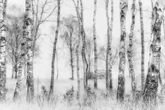 Black and White Photographic Print by Nel Talen - AllPosters.ca