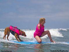 Surf dog Ricochet the SURFice Dog - Surf Dogs - Surf Dog Ricochet