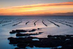 Les alignements de bouchots de Pénestin dans la lumière du soir... Une fierté du patrimoine local autant qu'une merveille pour le regard. Plus de photos de Bretagne et de Pénestin sur mon site: www.sebastienblond.com
