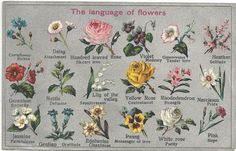 Flowers and Their Meanings | Seasonal spring wedding flowers and their meanings for an alternative ...