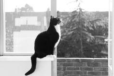 Karel in window b/w tuxedo in b/w photo