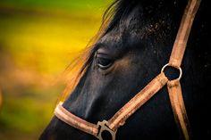 Black Horse by Rico Radau