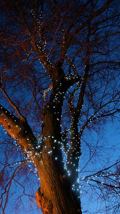 tree lights (find solar solution)