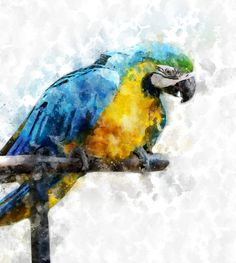 Free Image on Pixabay - Macaw, Bird, Animal, Parrot Free Pictures, Free Images, Ara, Paisley Art, Watercolor Bird, Parrot, Turtle, Instagram Posts, Painting