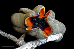 seed pod of what....?