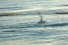 Abstract;Abstractions;Avian;Bird;Birds;Blue;Feather;Feathers;Flight;Florida;Flyi