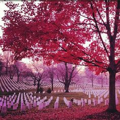 Arlington National Cemetery was established during the American Civil War on the grounds of Arlington House, formerly the estate of the family of Confederate general Robert E. Lee's wife Mary Anna (Custis) Lee, a great grand-daughter of Martha Washington.