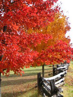 Fall in Virginia!