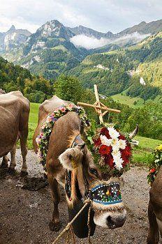 Almabtrieb / Kerns / Obwalden