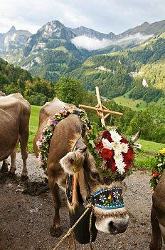 Almabtrieb / Kerns / Obwalden One of my favorite times to be in  Tirol and Bayern! Love the Almabtrieb!