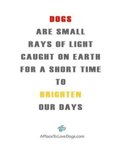 So true, it's like a light goes out when they go I miss you so much big dog !!